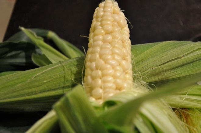 Corn Harvest - Sweet Kernels