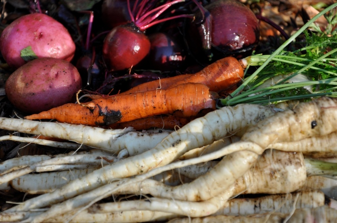 Winter Harvest: Potatoes, Beets, Carrots & Parsnips