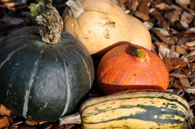 Winter Harvest: Squash