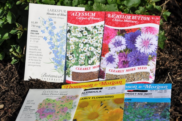 March Flower Planting: Alyssum, Bachelor's Buttons and More