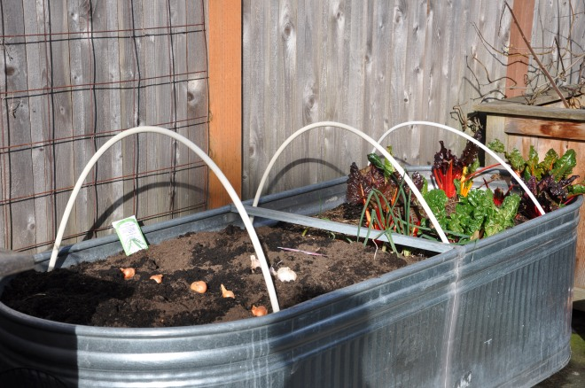 Metal Feed Troughs Make Great Growing Containers