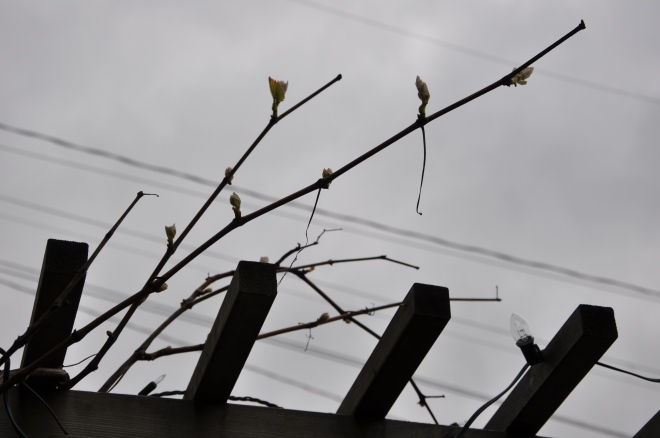 Foreboding Grapes Situation