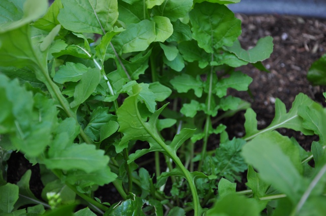 Garden Greens
