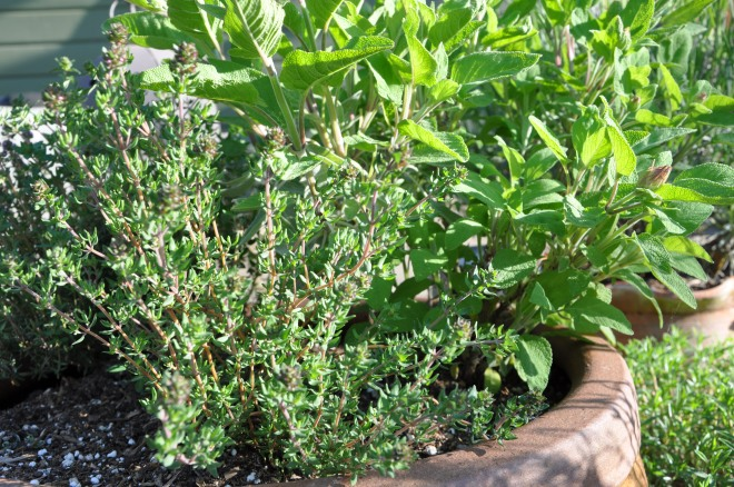 Thyme for Sage