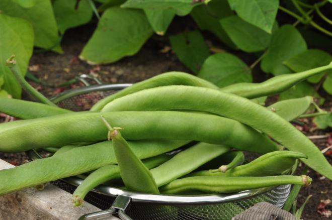 Beans in a Basket...Ok, Sieve