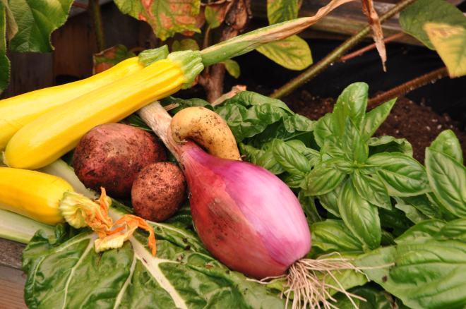 Garden Dinner Harvest
