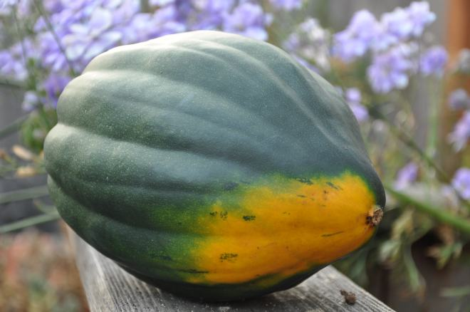 Acorn Squash - Fresh from the Garden
