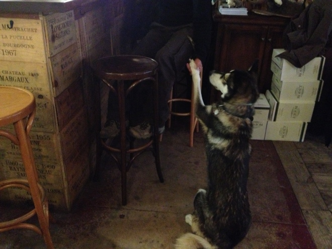 The Bar's Official Greeter