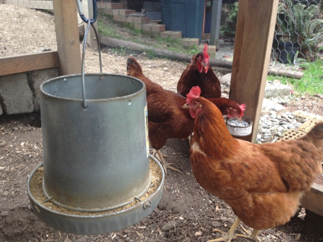 Three Delightful Hens