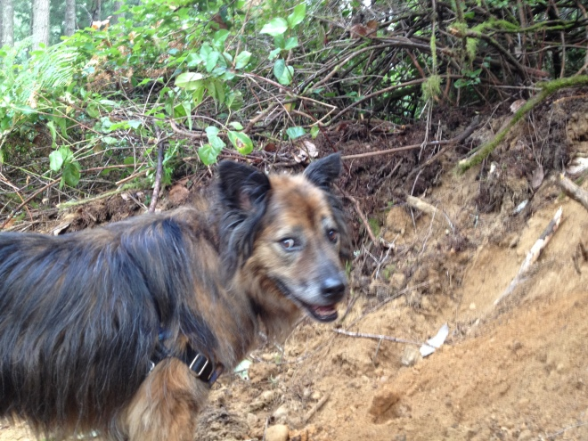 Chanterelle Hound (Even Cuter Than a Truffle Pig)