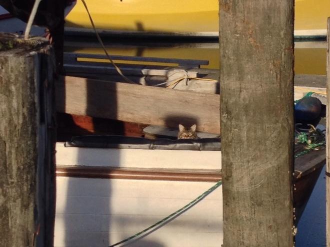 Swashbuckling Boat Cat