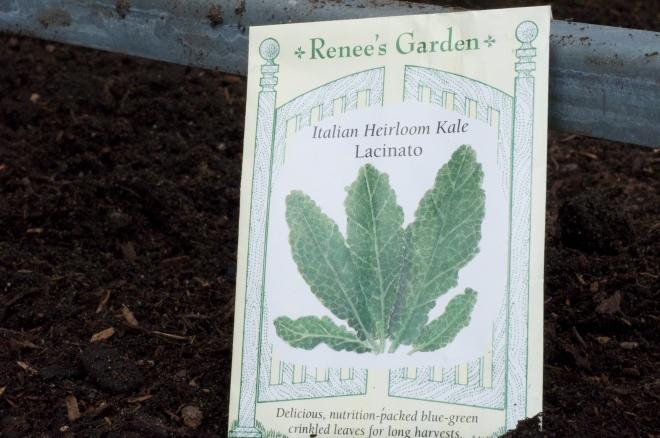 Italian Heirloom Kale
